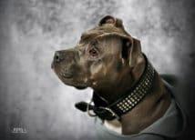 FOTO 1  - chien e1589880133834