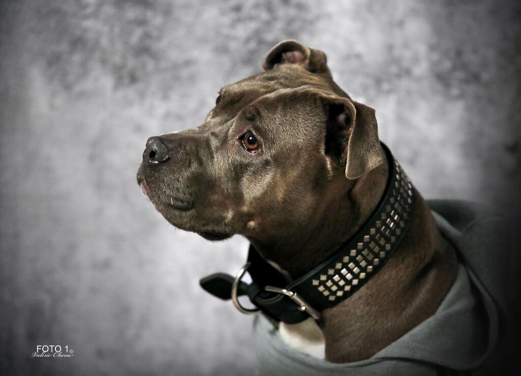 FOTO 1  - chien